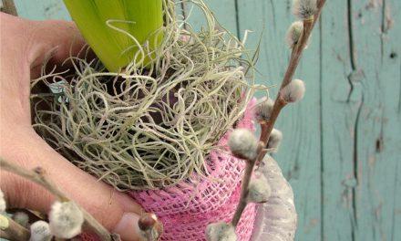 Hogyan készíts jácinttal tavaszi dekorációt a fal mellé?