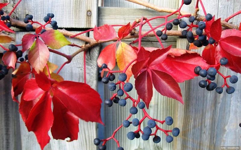 Top 23 termés, amikkel még szebb lesz az őszi dekoráció