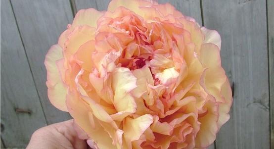 Májusi lakásdekoráció ötlet a hónap legszebb virágával